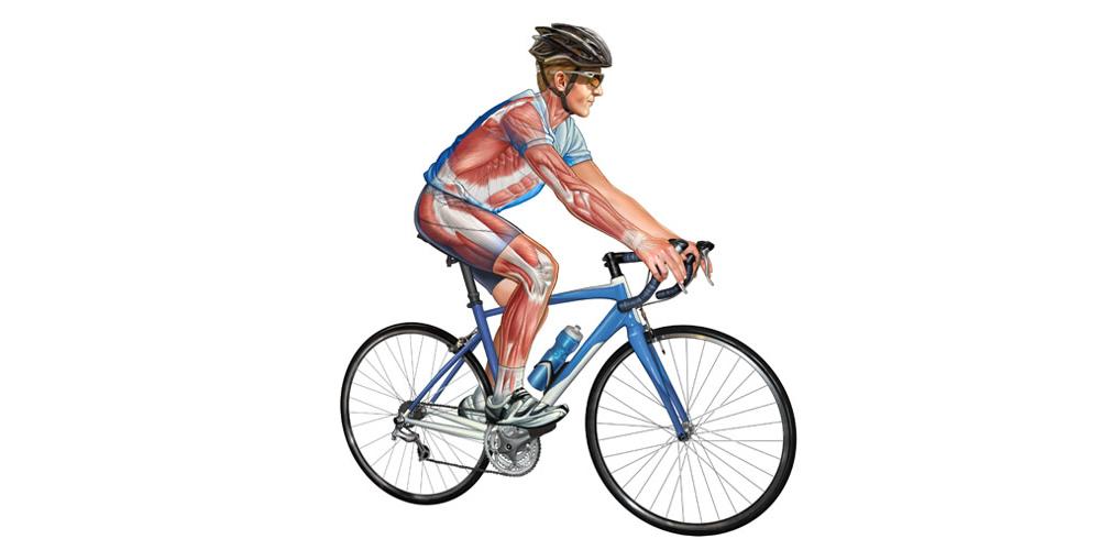 cyclist_illustration1