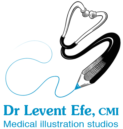Levent Efe Medical Illustration Studios